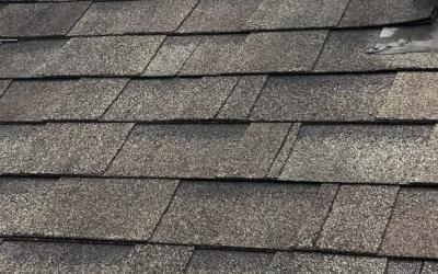 Roof Algae